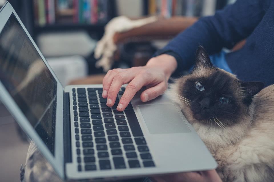 Cat surfing the web with owner